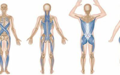 Cadenas musculares ¿Qué son y para qué sirven?